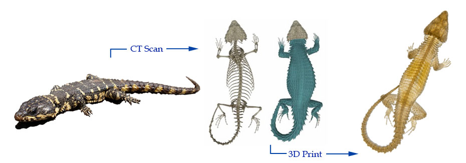 Photo of a lizard, a CT-Scan image of lizard, a photo of a 3D printed lizard from CT-Scan