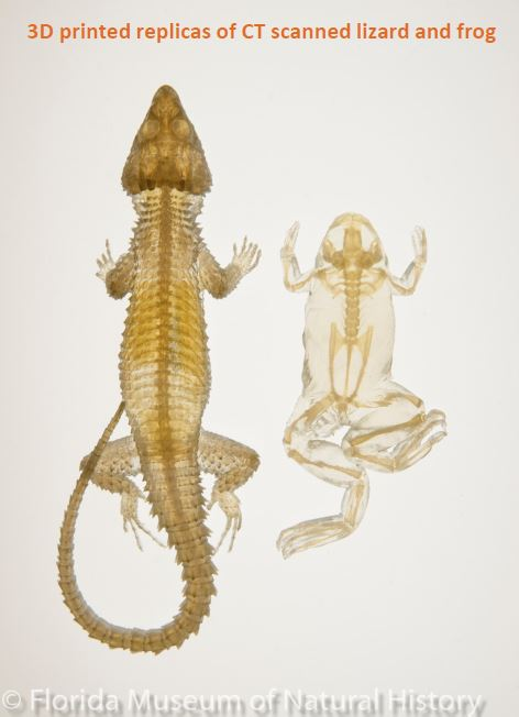 Translucent 3D replicas of CT scanned lizard and frog